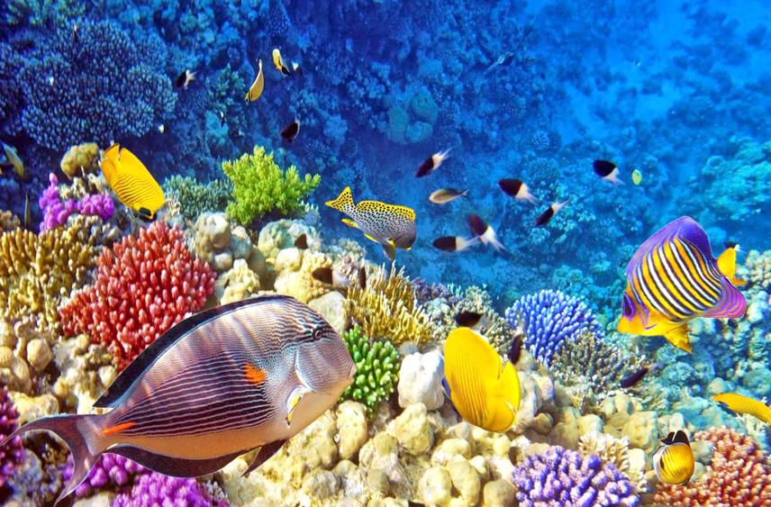 Alam bawah laut Raja Ampat - Touristexpedition.com