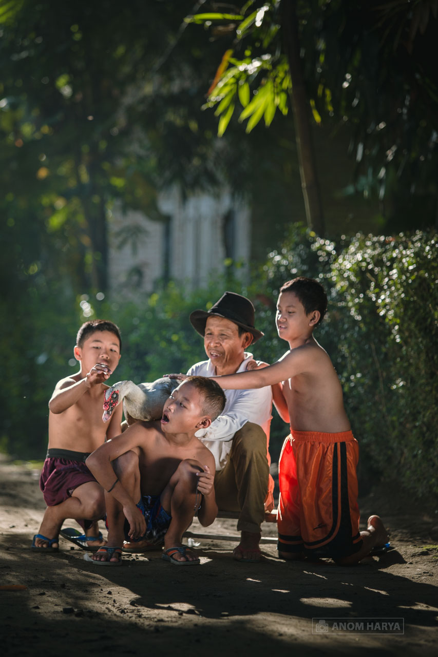 Anak Bermain Binatang