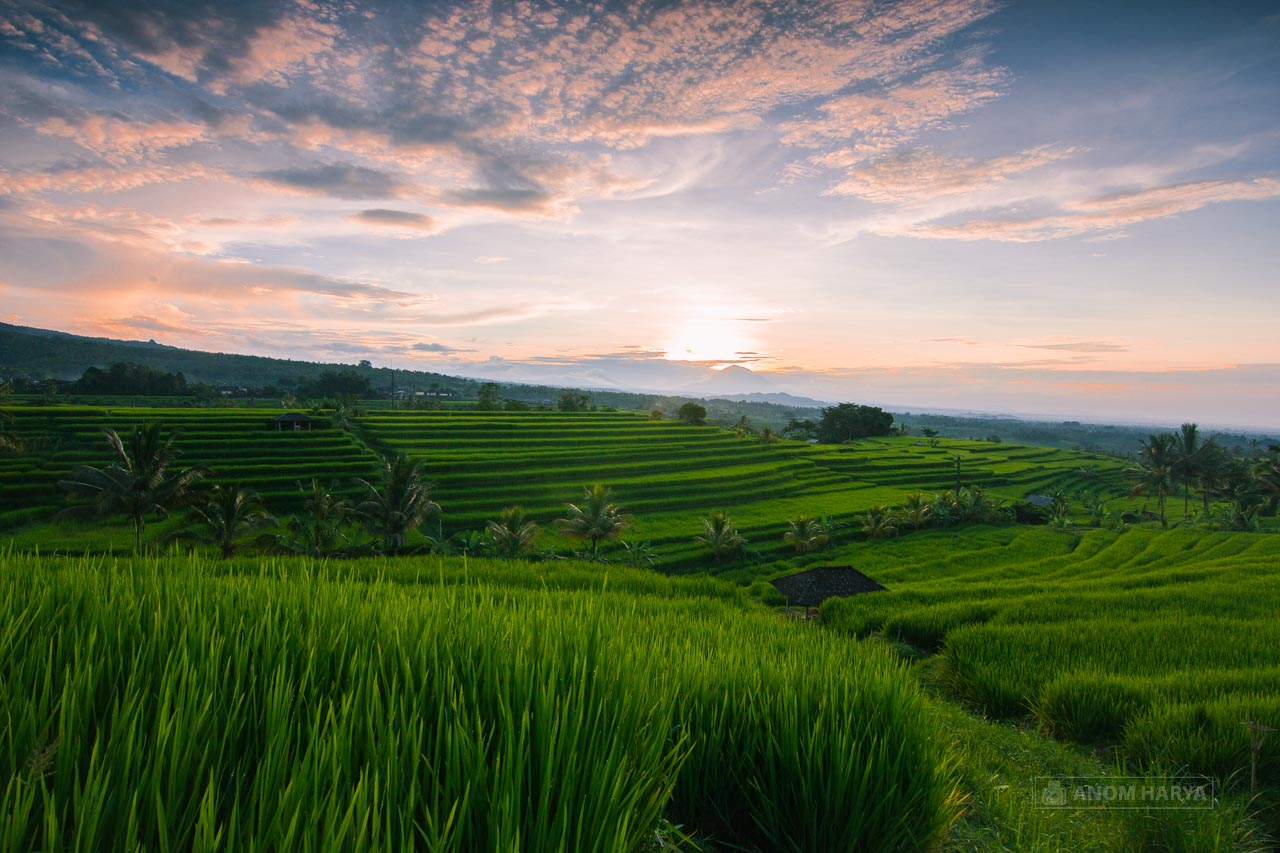 Foto Sawah Bali