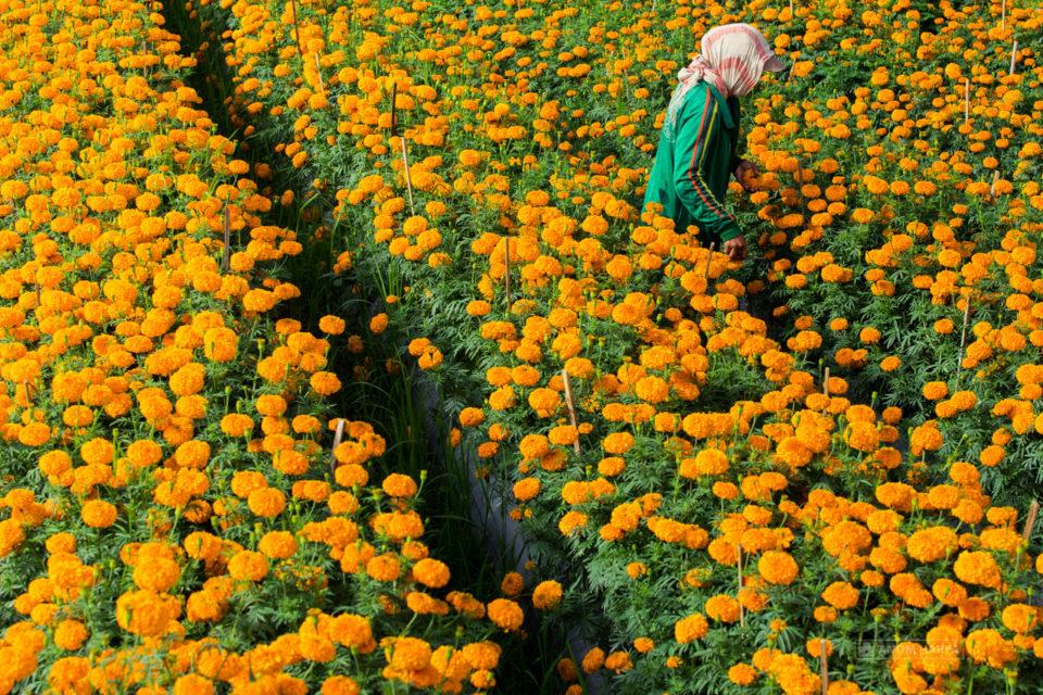 kebun bunga gumitir