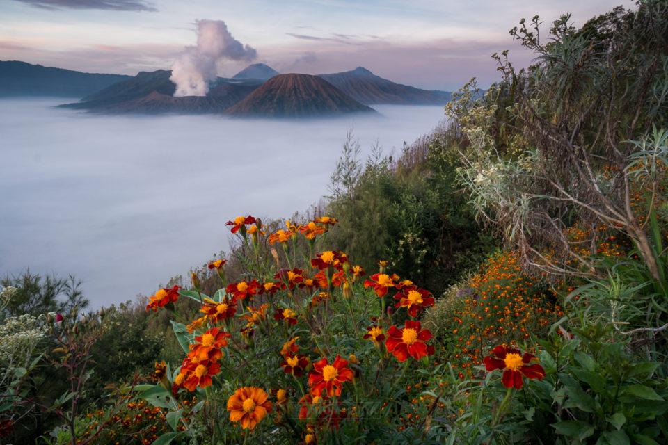 Pemandangan Lautan Pasir dari Seruni Bromo