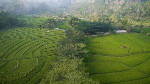 Aerial Drone Krabyakan Sawah Malang