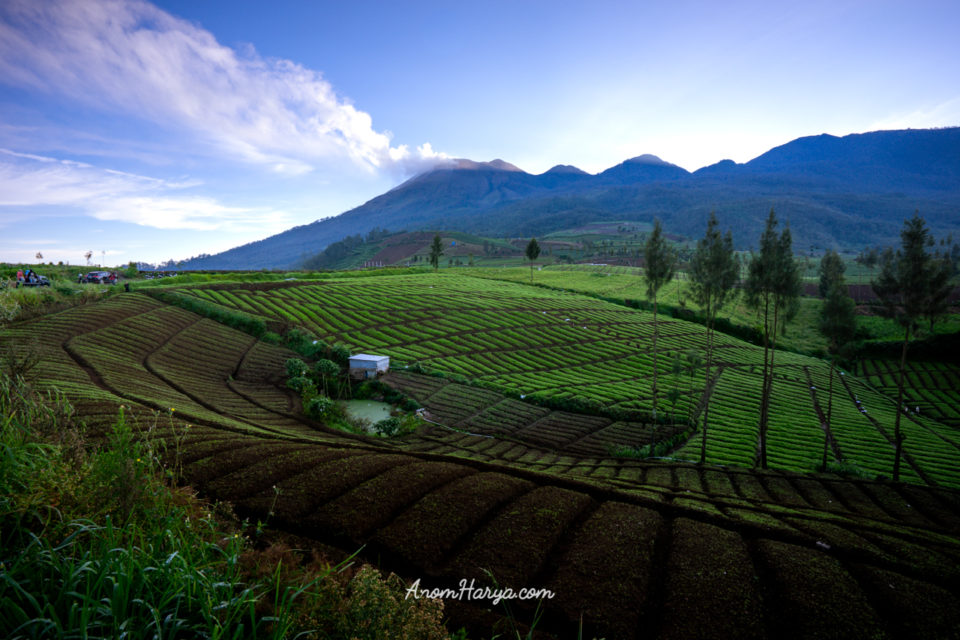 Sunrise View of Mount Welirang from Brakseng Cangar Malang