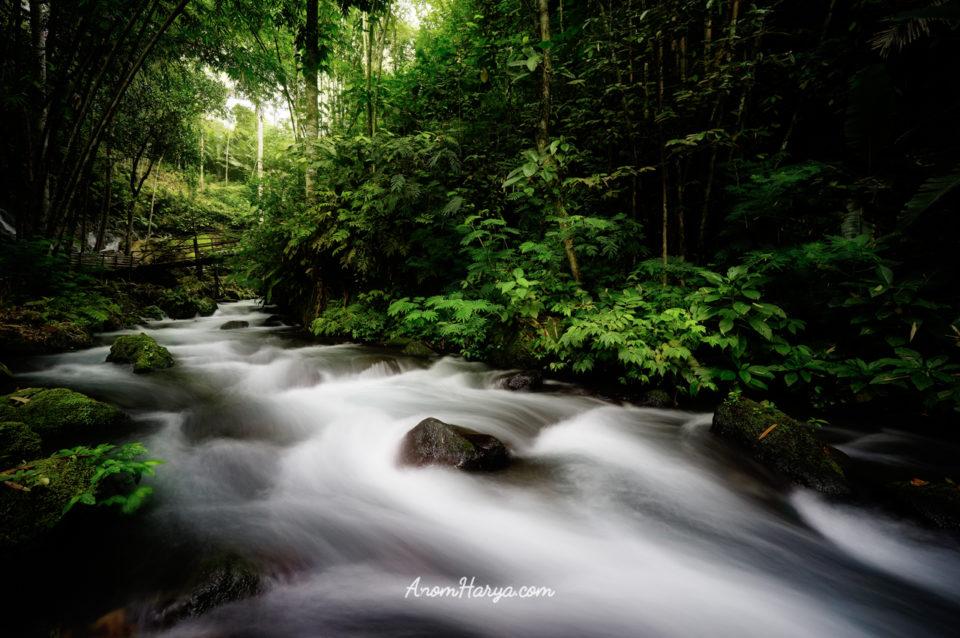 Aliran Sungai di Coban Sumber Telu Pronojiwo Lumajang