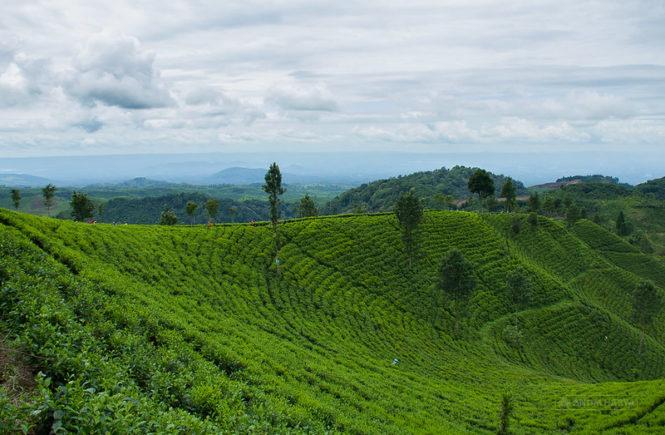 green track wlingi